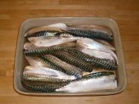 mackerel brine