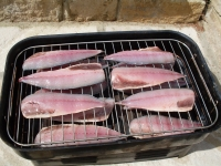 smoking mackerel