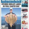 Langstone Report Sea Angling News November