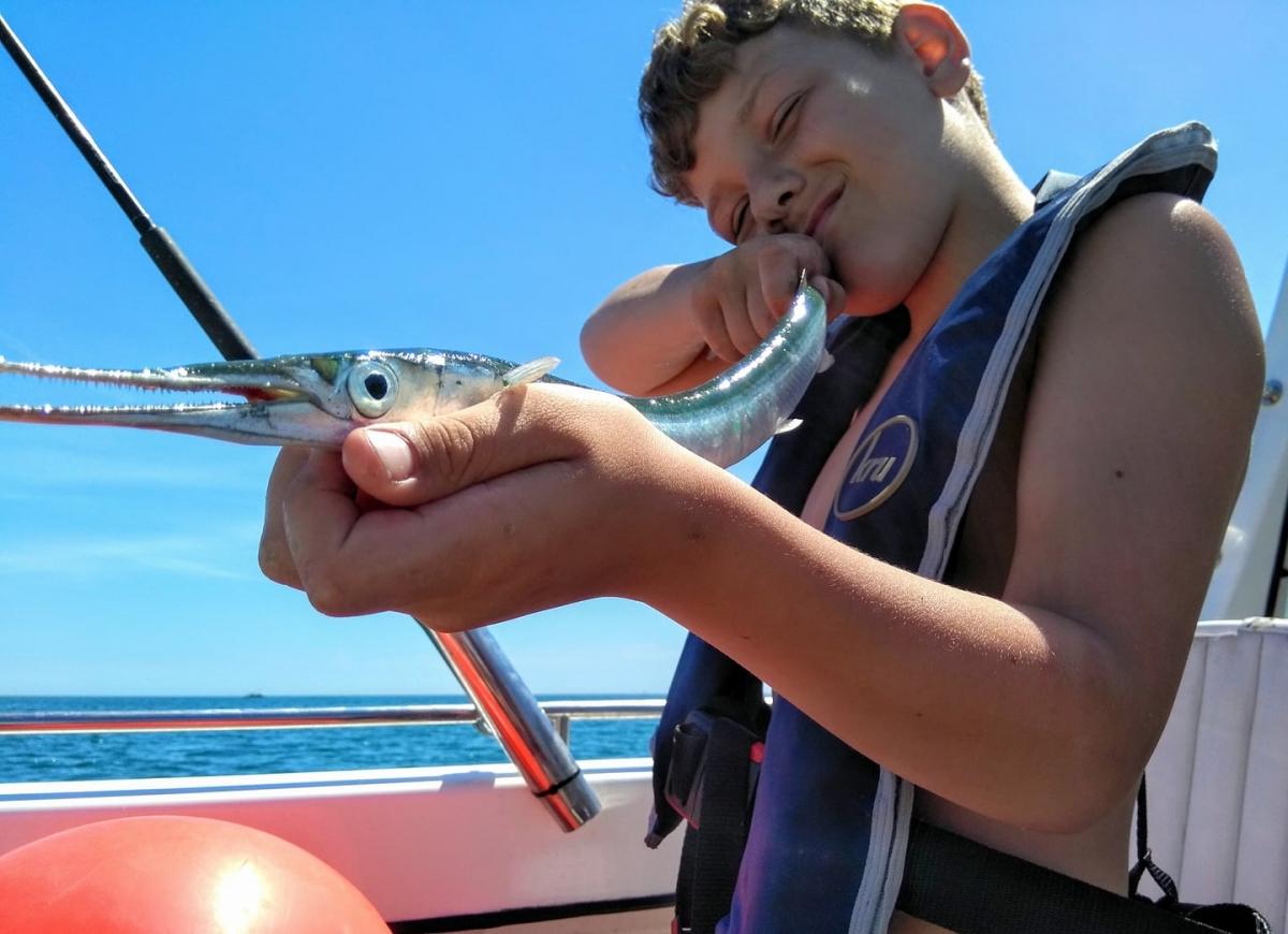 Archie garfish